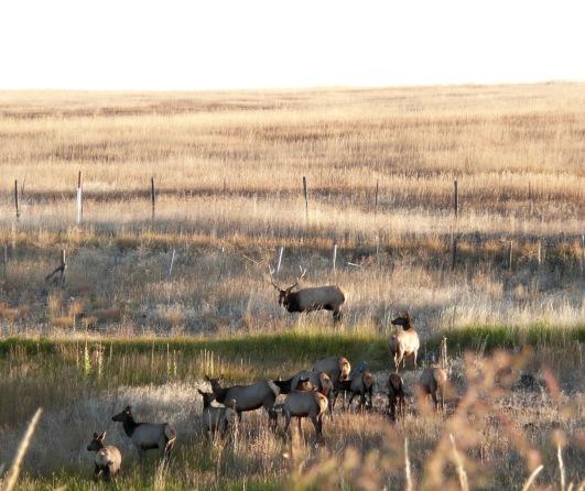 ranch1 - 1.jpg